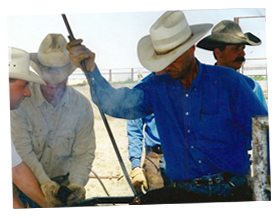 John Adams, ranch manager and Paula's husband branding cattle